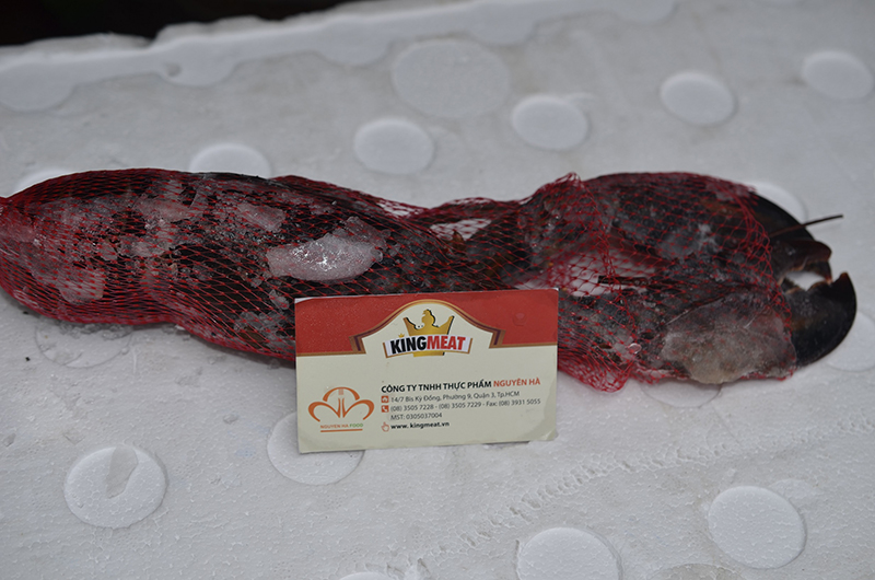 TÔM HÙM CANADA - FROZEN CANADA WHOLE RAW LOBSTER - 350-400 GRAM