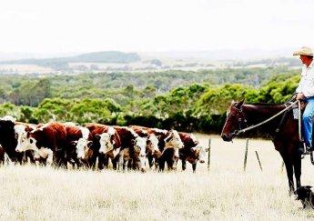 Cận cảnh quy trình chăn nuôi Bò Tại Úc