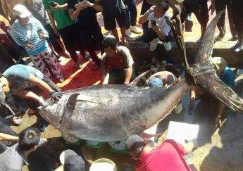 Năm Lịch Sử Của Ngành Thủy Sản Việt Nam – Cá Ngừ Nước Nhà Được Cả Thế Giới Săn Đón