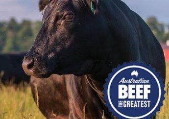 Giá thịt bò Australia tăng cao kỷ lục và những loại thịt bò nhập khẩu tại Việt Nam