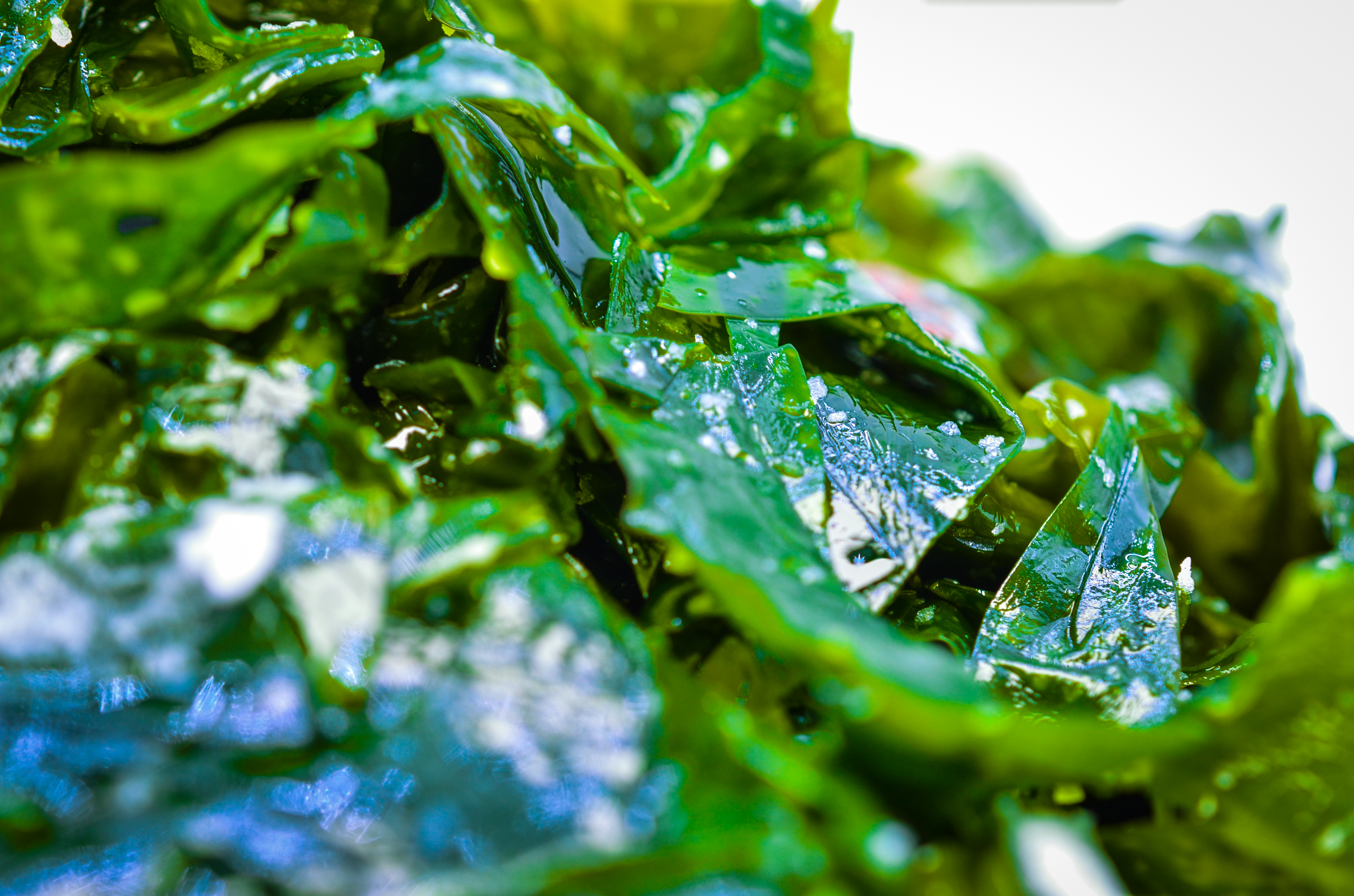 Rong_bien_tuoi_Wakame_Seeweed